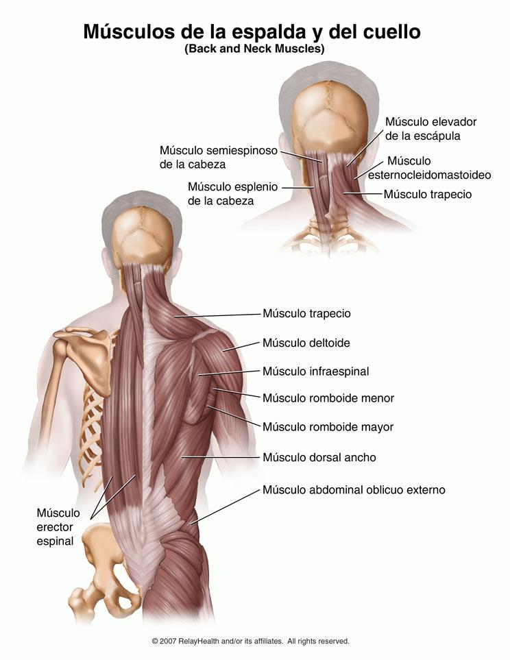 Duele la parte inferior del vientre la espalda y mensual no existe