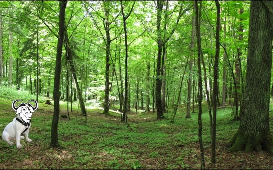 Knyszyń-Forest-with-francais-gnudog-DEF